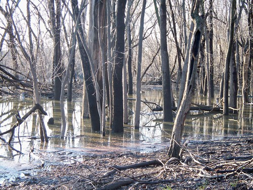 3.29.2009 River Grove (37)