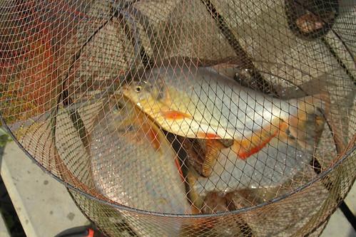 Koh samui Skylake fishing park & restaurant 釣り0012