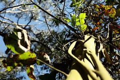 Up vine