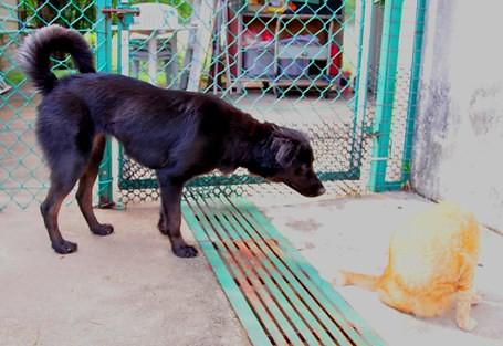 Kanly-Dog_Bonnie_20090404_001_DSC_0150x