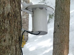 Name that thing . . . a light? an electric bird feeder?