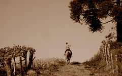 estamos indo.. de volta... pra casa!!! (fertomiello) Tags: interior paisagem pedro estrada cerca cavalo sépia égua araucária colônia pedrinho parreiral sãojosédoouro tomiello