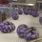 The making of Easter eggs: inside Cadbury's Bournville factory