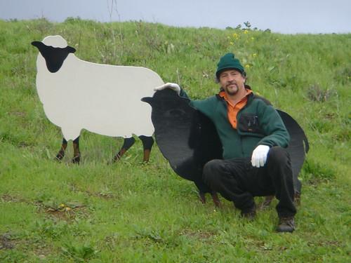 Tom Kennedy & Sheep