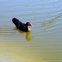 Gone For a Swim (Chris C. Crowley) Tags: wateroceanslakesriverscreeks walkinginbeauty chriscrowley reedcanalpark celticsong22 yourfriendlyneighborhoodpark goneforaswim