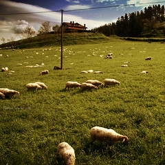 Ardiak Mendian (VRONIQUE) Tags: blue verde green colors clouds arbol bush sheep colores cielo nubes zb monte donosti arbre euskadi vronique cian paisvasco ovejas ardiak mendian vroniquecarreoandreu veroniquecarreo