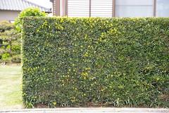 一般の家の垣根