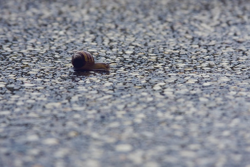 Baby Snail [122/365]