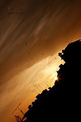 Day-Dreaming... (SonOfJordan) Tags: morning light sky orange sun colour nature birds silhouette clouds sunrise canon eos early warm mood amman jordan flare distance tilt xsi  450d  samawi sonofjordan shadisamawi  wwwshadisamawicom