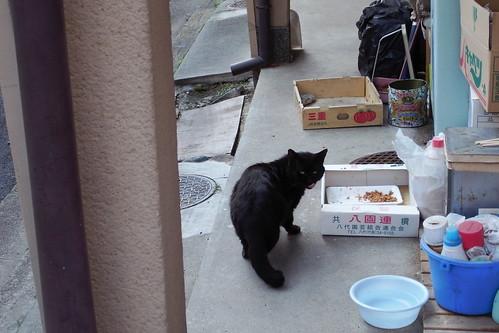 Today's Cat@20090506