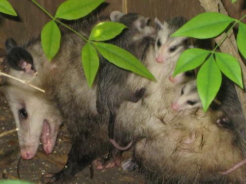 Mama with babies