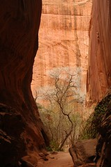 Capitol Reef (Ziemek T) Tags: hiking backpacking capitolreef