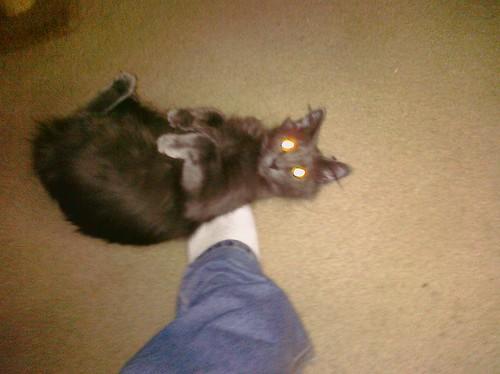 CAT:WIKIFY