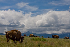 Charlie Russel Clouds (BigSkyKatie) Tags: blue sky mountains nature clouds landscape rockies buffalo montana natural low bull plains lying bison nationalbisonrange nationalwildliferefuge nwr potofgold bigskycountry nbr moiese natureoutpost katielasallelowery bisonscape