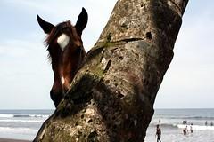 (laurajhirst) Tags: africa horse palmtree cameroon limbe semebeach