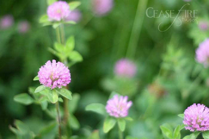 06-26-flowerclover2