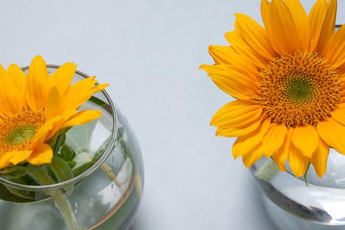 0908 flowers #2