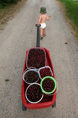 ezra-cherries-driveway