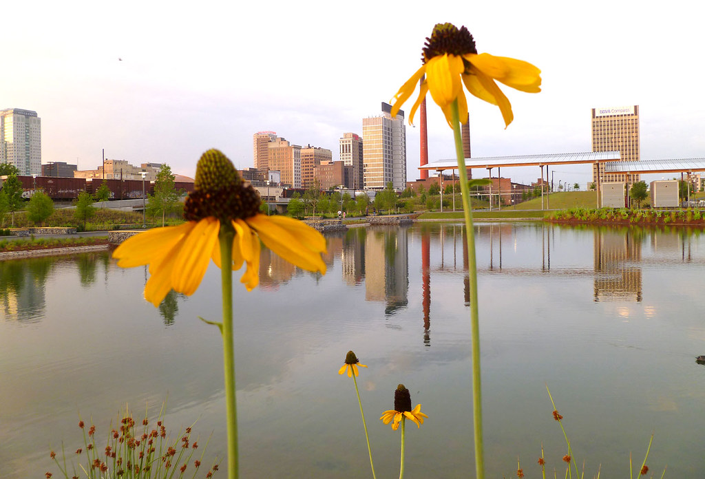 sunflowers at Railroad Park