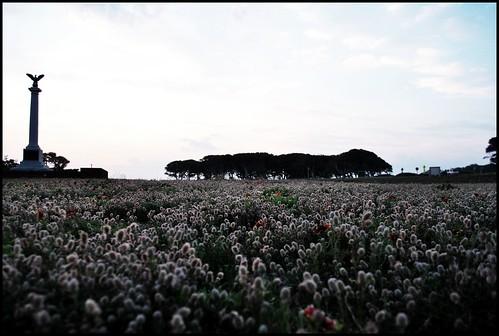 field of weeds nc