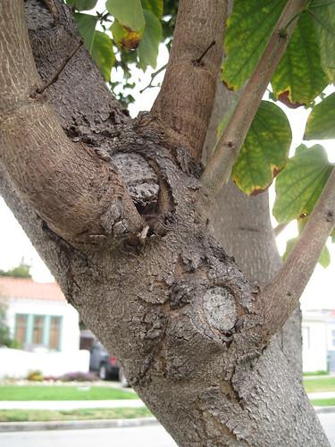 mystery tree bark