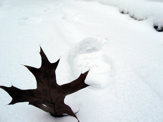 A Leaf in the Snow (Click to enlarge)