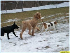 Mia, Jay, Dougie (Alternative Dog Daycare) Tags: jay doug buffy sonny dogdaycare alternativedogdaycare