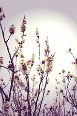 Reaching to the sun (AimeeLopez) Tags: flower tree clouds spring highcontrast top20nm