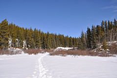 20090314_002_N_Powderface Photo