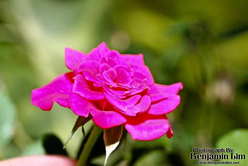 butterflyfarm_flower01