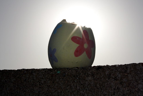 The Eggsperiment - Day 3