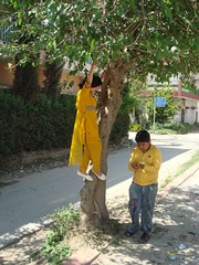rememebr (tango 48) Tags: pakistan boy people white house tree green girl yellow jeans mulberry islamabad mulberrytree
