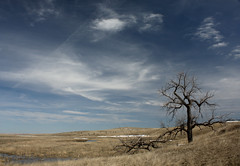 Lonely... (Kevin Aker Photography) Tags: favorite southdakota skyscape landscape photography photo moving interestingness amazing cool interesting image photos awesome favorites images explore greatshot strong frontpage thebest flickrfavorites mostviews favoritephotos bestphotos coolclouds favoritephotography coolimages photographyfavorites flickrsbest coolimage awesomecapture weatherphotography amazingphotos thebestonflickr amazingphotography coolphotography stormphotography awesomeimages awesomeimage profesionalphotography strongphotography kevinaker kevinakerphotography everyonesfavorites coolcaptures thebestweatherphotos awesomeweatherphotos showmethebestphotos exploremyphotography simplyawesomephotography bestphotographyonflickr photoswiththemostviews strongphoto