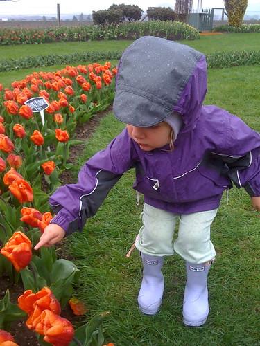 Tiptoe Tulips