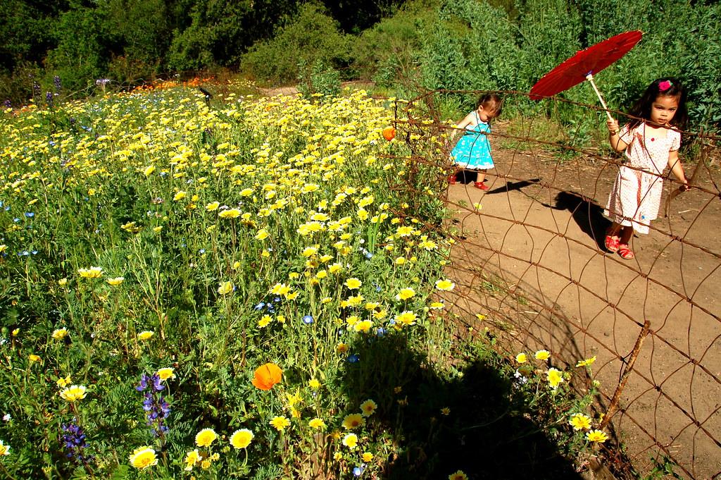 along the garden