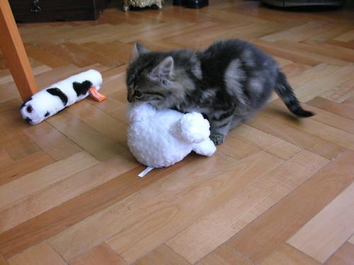 Az igazi macska legyűrte a plüss macskát