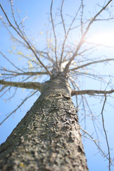 04-23-tree
