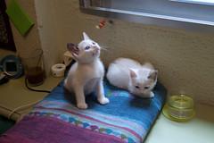 DSC_0846 (eckelon) Tags: gatos leche galletas