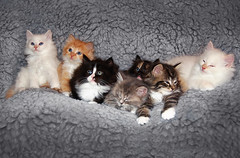 Cute kittens (crsan) Tags: sleeping cats cute kittens mothers mjau christianholmercom 5555550199examplecom