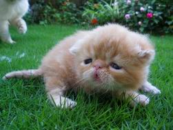 調整大小kitten139_0503222748_1299472068
