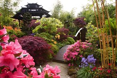 Spring in the pagoda garden (Four Seasons Garden) Tags: uk morning bridge flowers blue england west colour green english nature beautiful leaves marie stone gardens garden four spring day all colours azaleas open seasons mail buddha picture peaceful competition daily bamboo tony national fourseasons acer rhododendron winner ericaceae oriental urbangarden staffordshire newton walsall englishgarden midlands conifer cloudtree magnoliastellata dailymail blackcountry ngs gunneramanicata nationalgardenscheme yorkstone acers favoritegarden fourseasonsgarden wonderfulworldofflowers charityopendays