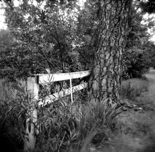 Auld Fence Line
