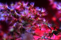 Flowers at the Garden (miamiphotographerone) Tags: africa canon40d héctorfalcónrodríguez