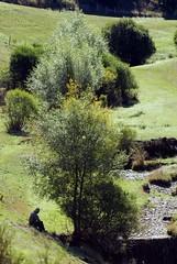 Le repos du Berger (Lozère, Cévennes)