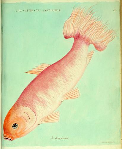 015-El Ruborizado-Histoire naturelle des dorades de la Chine-Martinet 1780