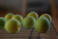 Drying ume