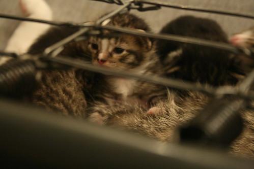kittens 058