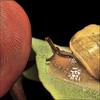 Hello.... (ViaMoi) Tags: ontario canada macro canon photography photo 5 finger ottawa snail highfive tamron90mm canon40d viamoi