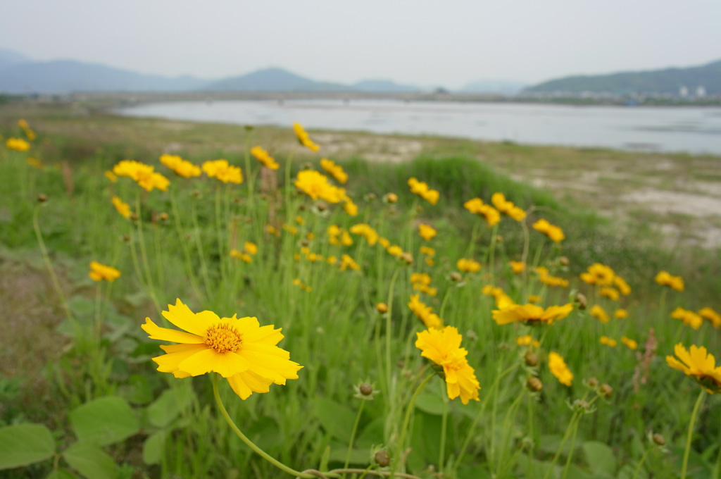 at the riverbank of Matsuura river, Karatsu