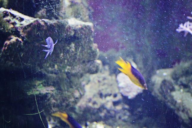 MODS fish tank